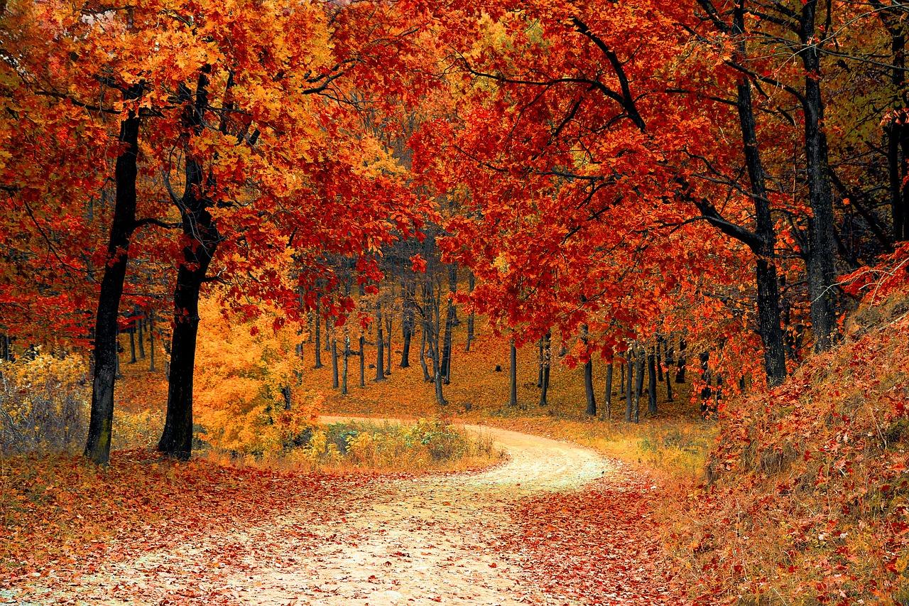 fall-1072821_1280.jpg