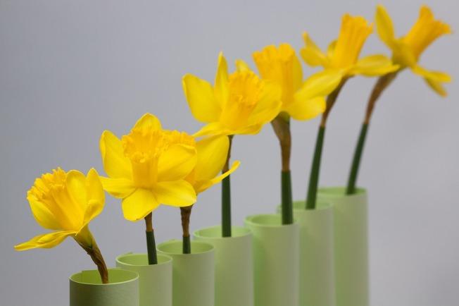 daffodil-1160922_960_720